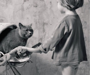 cat, kid, and cuteness image