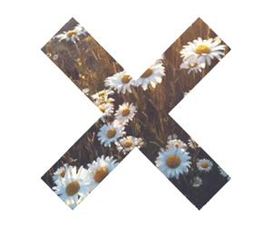 daisy, flowers, and x image