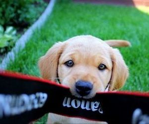 Awe, lovely, and puppy image