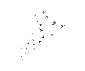 bird, fly, and overlay image