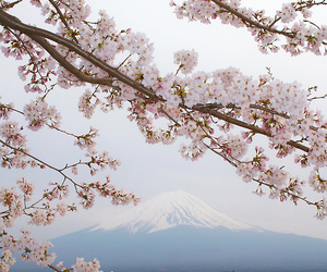 flowers, japan, and mountain image