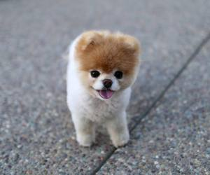 dog, cute, and boo image