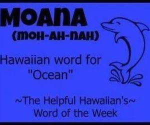 dolphin, hawaiian, and language image