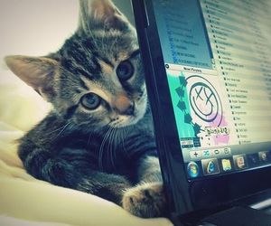 adorable, kitten, and laptop image