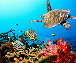 ocean, turtle, and sea image