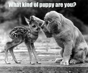 doe, funny, and puppy image