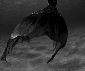 mermaid, black, and sea image