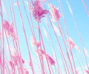 pink, blue, and flowers image