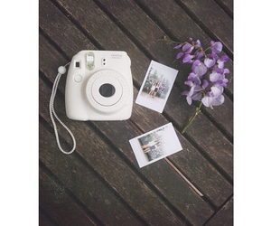 flowers, polaroid, and summer image