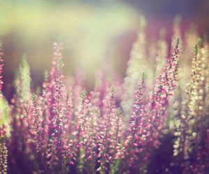 flowers, nature, and bokeh image