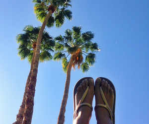 leg, nature, and palm image