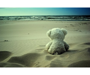 beach and bear image