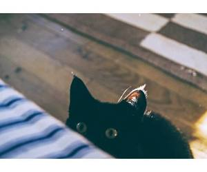 cat, indie, and cute image