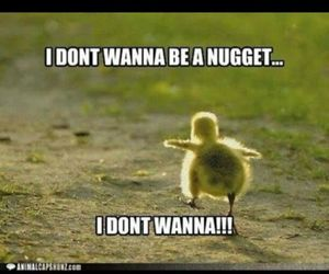 nuggets, funny, and lol image