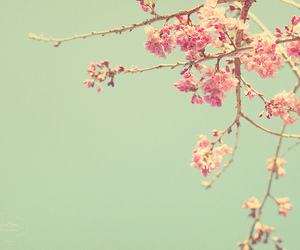flowers, photography, and pink image
