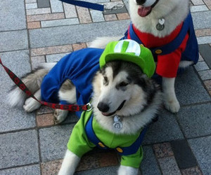 dog, mario, and cute image