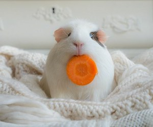 cute, animal, and carrot image