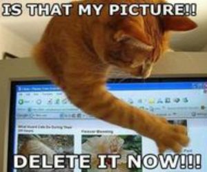 cat, delete, and lol image
