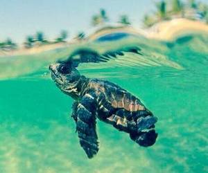 turtle, sea, and animal image
