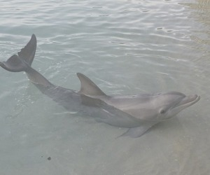 dolphin, animal, and pale image