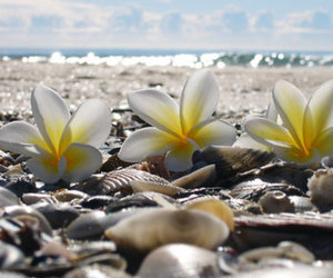 beach, flowers, and shells image