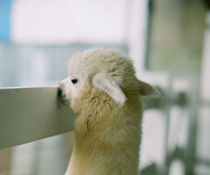 cute, funny, and animal image