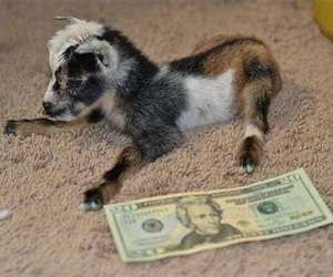 money, adorable, and baby image