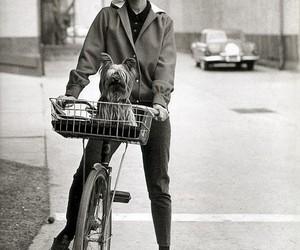 audrey hepburn, bike, and dog image