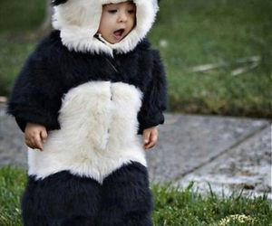 panda, cute, and baby image