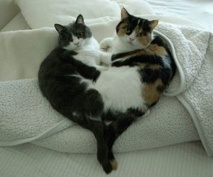cats, heart, and cute image