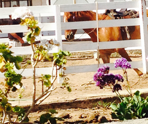 flowers, horse, and horses image