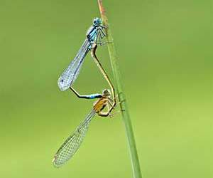 animal, green, and biology image