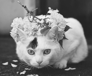 cat, black and white, and flowers image