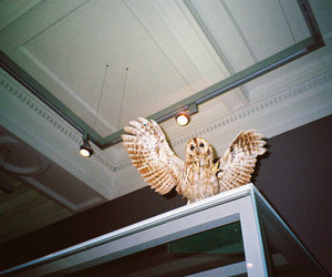 film, owl, and photography image