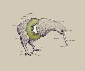 kiwi, bird, and art image