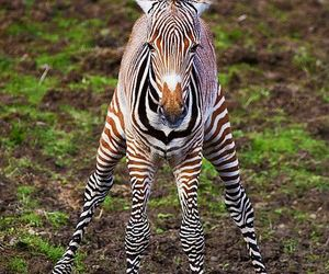 zebra and animals image