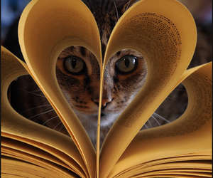 cat, book, and heart image