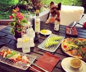 dog, food, and sweet image