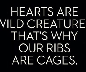 heart, love, and cages image