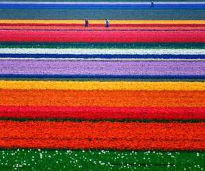 bright, color, and field image