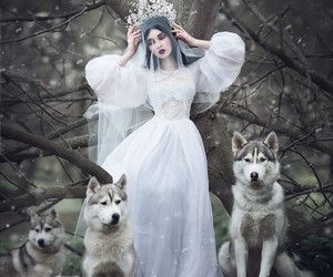 wolf, forest, and Queen image