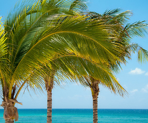 palm trees, beach, and summer image