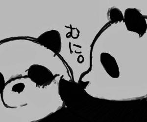 black, white, and panda image