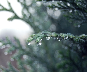 drop, tree, and green image