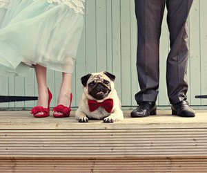 dog, pug, and couple image