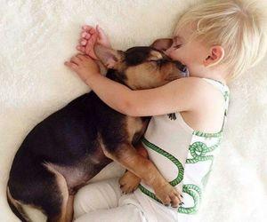 amazing, beauty, and dog image