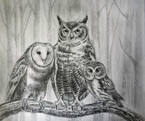 art, draw, and owl image