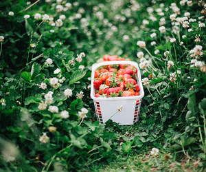 strawberry, summer, and food image