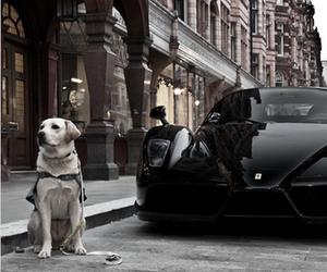 car, dog, and black image