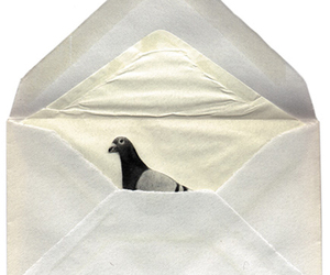 bird, Letter, and pigeon image